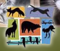 [Folsom City Zoo Sanctuary Logo]