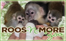 [Roos-n-More Zoo Logo]