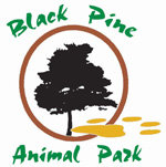 [Black Pine Animal Sanctuary Logo]
