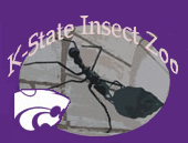 [Insect Zoo at Kansas State Logo]